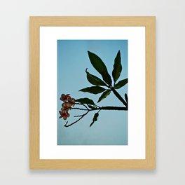 Plumeria Pakalolo Framed Art Print