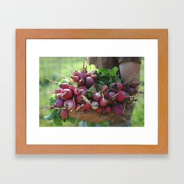 Dirty Radishes  Framed Art Print