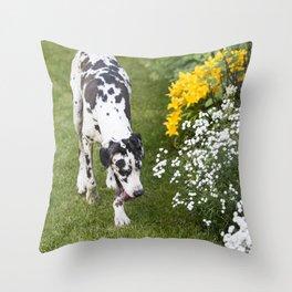Harlequin Great Dane Walking By Flowerbed Throw Pillow