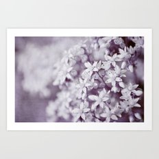 white & purple Art Print