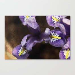 Mini Iris Canvas Print