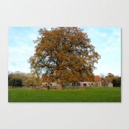 Barn & Oak Canvas Print
