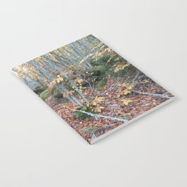 Chestnut Forest in the Fall Notebook