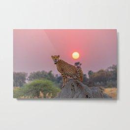 Cheetah at Sunset Metal Print