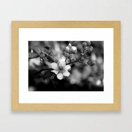 Blackberry Flower Framed Art Print