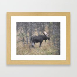 Moose on the Murray Framed Art Print