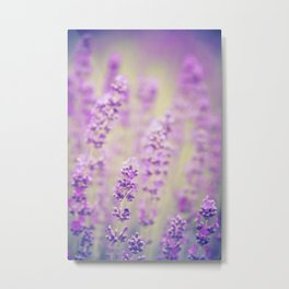 lavender background with flowers Metal Print