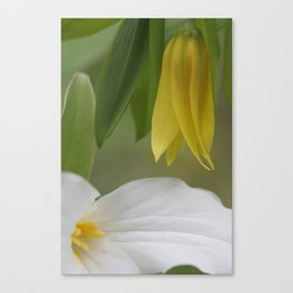 touch of yellow Canvas Print