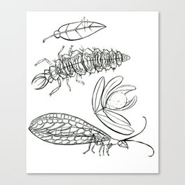 Insect Coloring Book Series - Beneficial Lace Wing Canvas Print