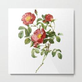 Vintage Red Roses [06] Metal Print