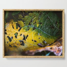Green Leaf Consumption. Nature Photography Serving Tray