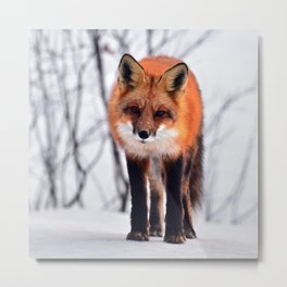 Small Friend || Metal Print