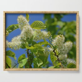 Mayday Tree in Bloom Serving Tray