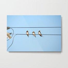 Sleepy Swallows - Birds on the wire Metal Print
