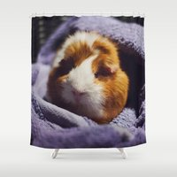 guinea pig Shower Curtains featuring My brothers guinea pig by Jamie de Leeuw