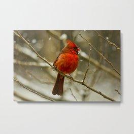 Wintry Cardinal Metal Print