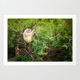 Monkey 7 Art Print