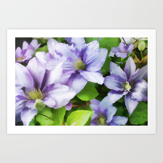 Delicate Climbing Clematis Art Print