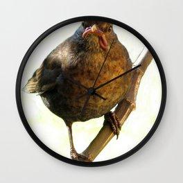 Female Blackbird (Turdus merula) Wall Clock