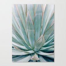 Minimalist Agave Canvas Print