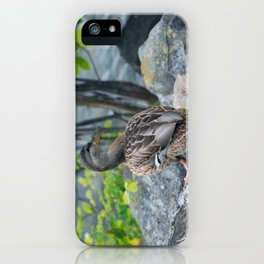 Duck on the Rocks (Common Mallard) iPhone Case