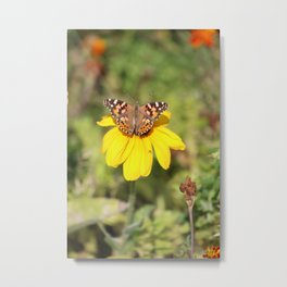Autumn Butterfly Colors Metal Print