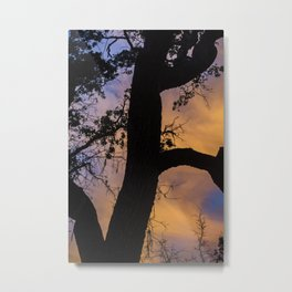 Silhouetted Tree at Sunset Metal Print