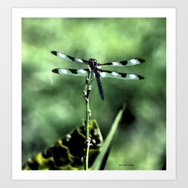 Dragonfly retouched Art Print