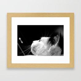 Black & White Cat Framed Art Print