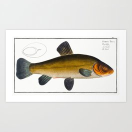 Tench (Cypirnus Tinca) from Ichtylogie ou Histoire naturelle generale et particuliere des poissons ( Art Print