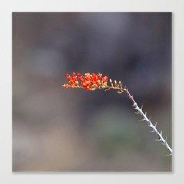 Watercolor Flower, Ocotillo 01, Ventana Canyon, Arizona, Prickly Red Canvas Print