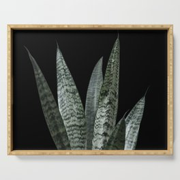 Snake plant with black Serving Tray