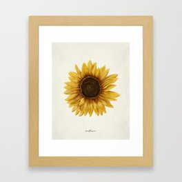 Realistic Sunflower - Kansas State Flower Framed Art Print