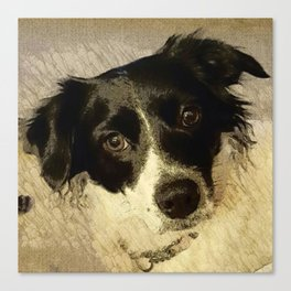 Zoey the Border Collie Canvas Print