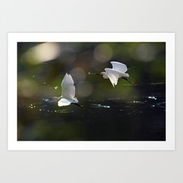 White Herons Flying Art Print