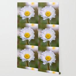 Colourful daisy flower Wallpaper
