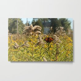 Indian Summer in Maine Metal Print