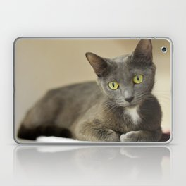 Comfortable Kitty Laptop & iPad Skin