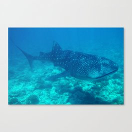 Whale Shark, Mamagilli, Maldives Canvas Print