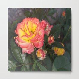 Great rose Metal Print