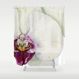 Cream & Fuchsia Phalaenopsis Orchids Shower Curtain
