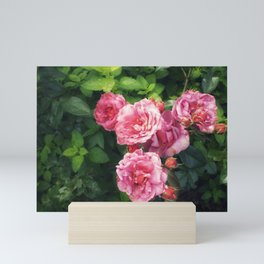 Summer Roses Mini Art Print