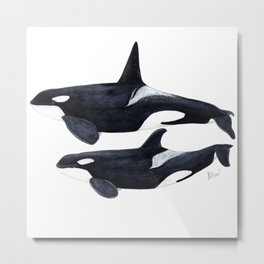 Orca male and female Metal Print
