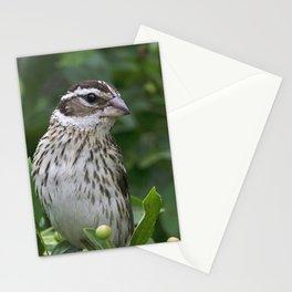 Female Rose-Breasted Grosbeak Stationery Cards