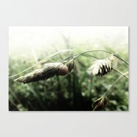 grass Canvas Prints featuring grass by emegi