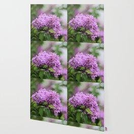 Lilac Bouquets Wallpaper