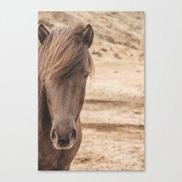 Wild Horse of Iceland Canvas Print