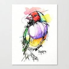 Red Lady Gouldian Finch Canvas Print