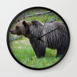 Grizzly bear in the Canadian Rockies Wall Clock