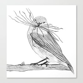 Sparrow making a nest Canvas Print